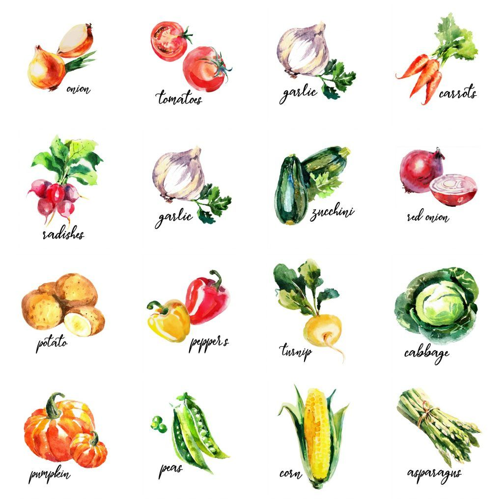 16 Free Watercolour Vegetable Kitchen Printables In