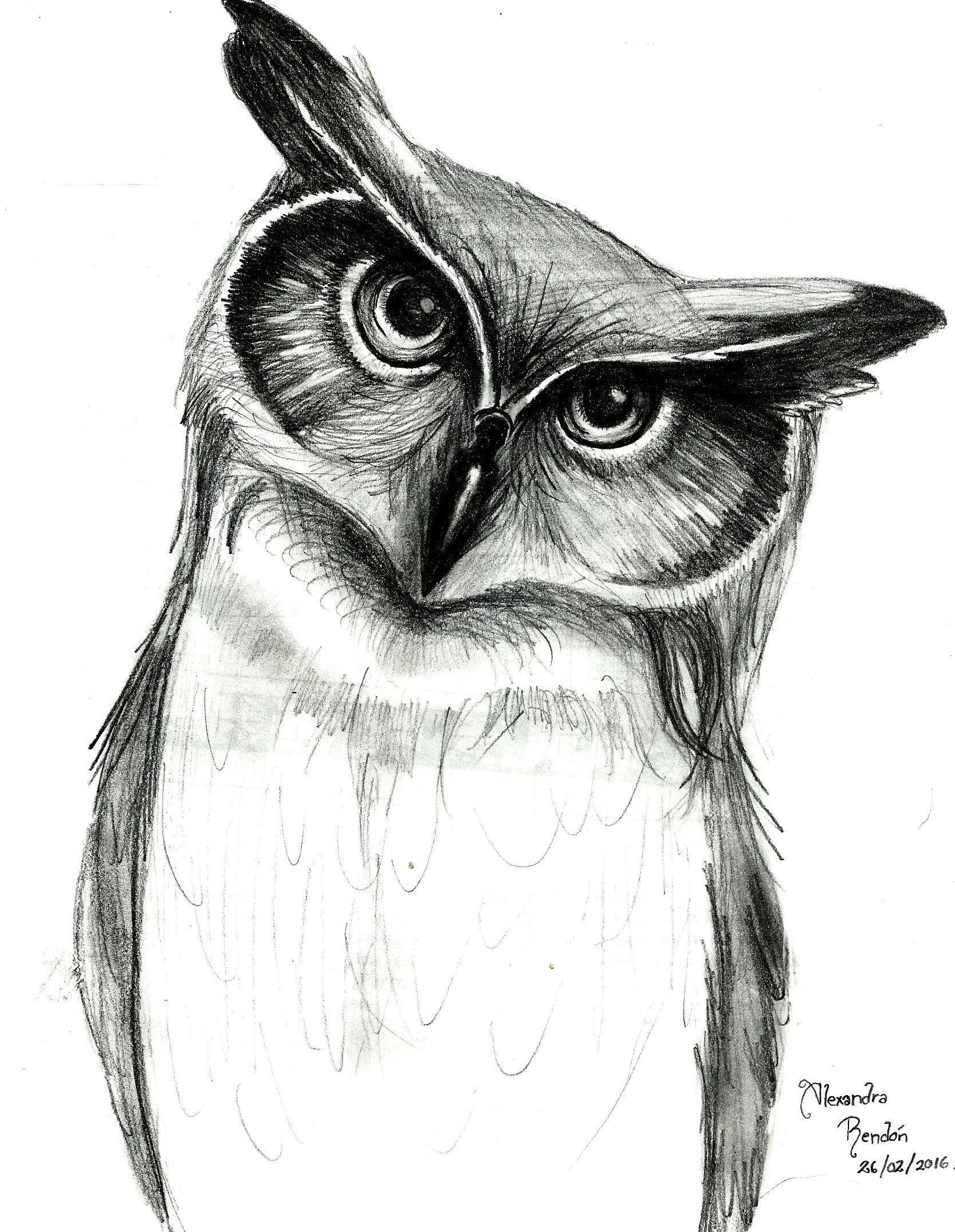 dibujo de Bho a lpiz  Bhos  Pinterest  Owl