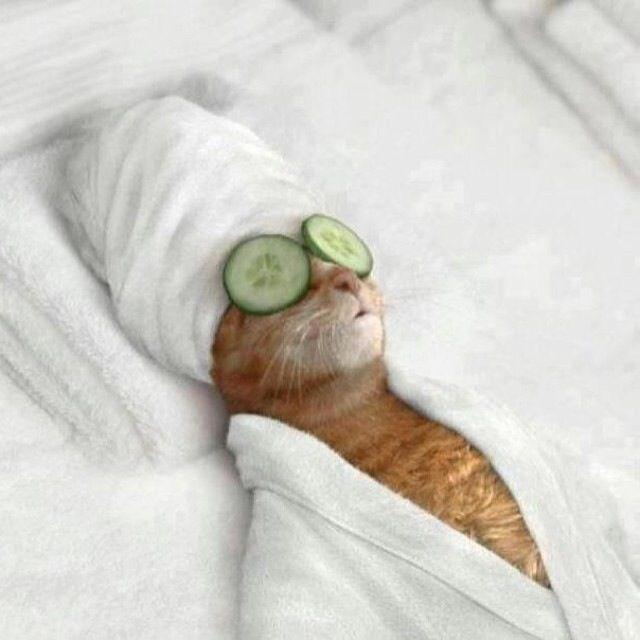 「relax cat」の画像検索結果