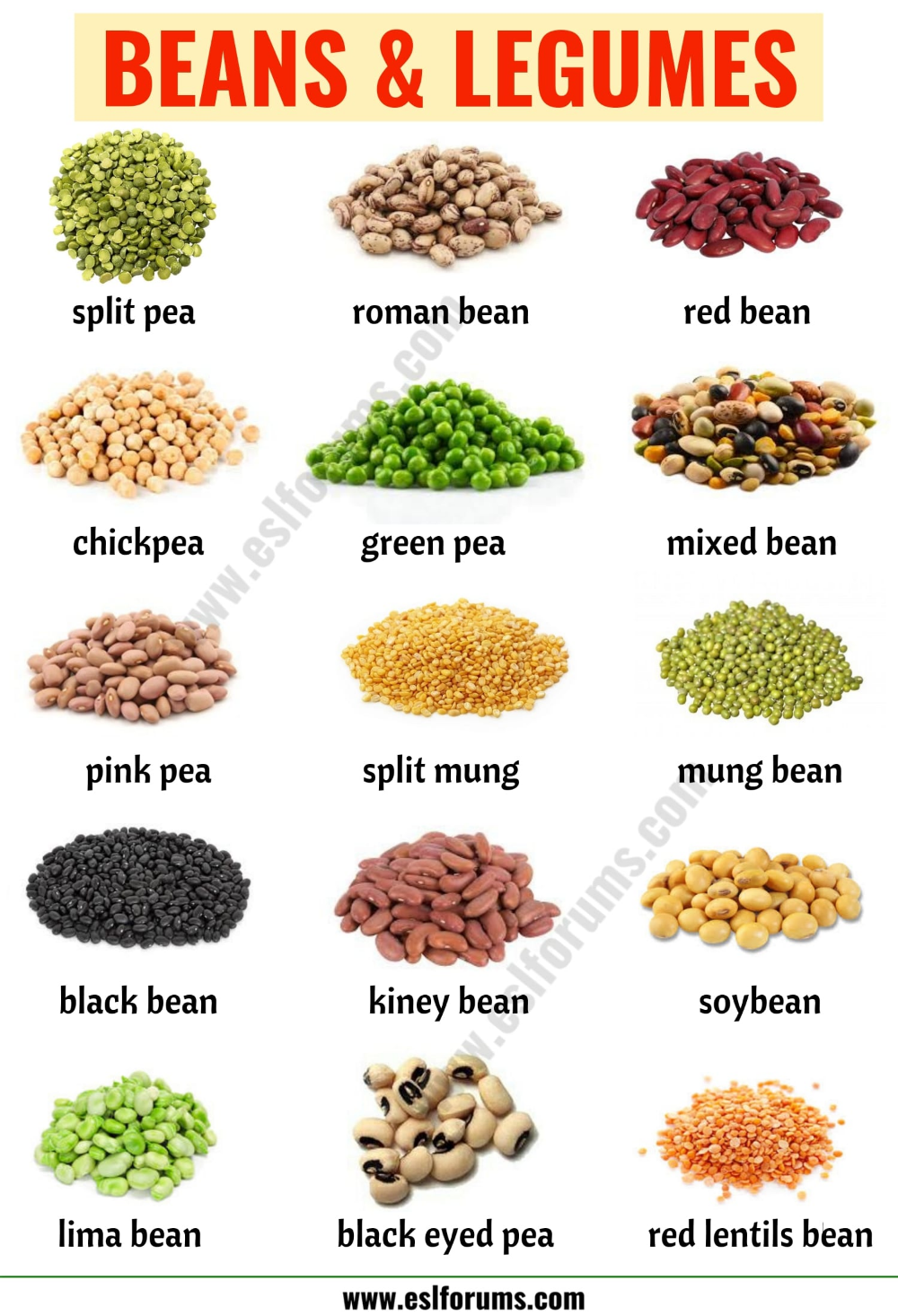 Types Of Beans 15 Different Types Of Beans Legumes With The