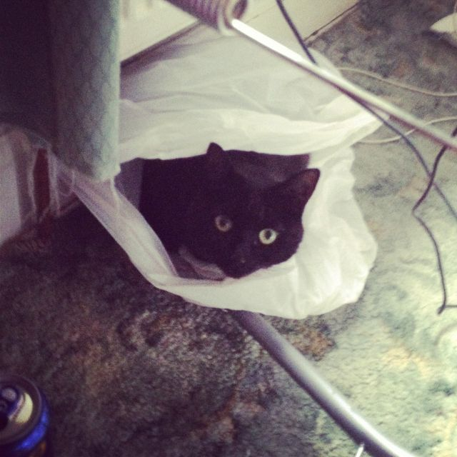 She won't sleep in her bed but give her a plastic bag and she's in heaven