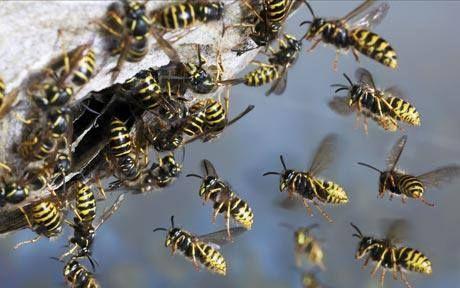 34e0ed77ffbf528cfc5c55a3d4954c2b - How To Get Rid Of Bee Hive In Attic