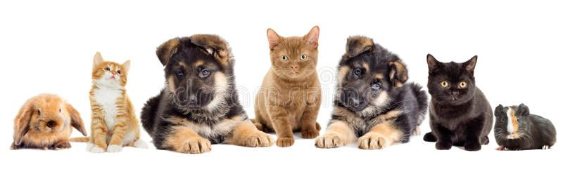 Set Pets On A White Background Ad Pets Set Background White Ad Kitten Images Puppy Images Pets