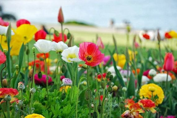 Fotografie, wilde Blumenwiese, hochglanz, Premiumpapier, 20cm x 30cm, signiert