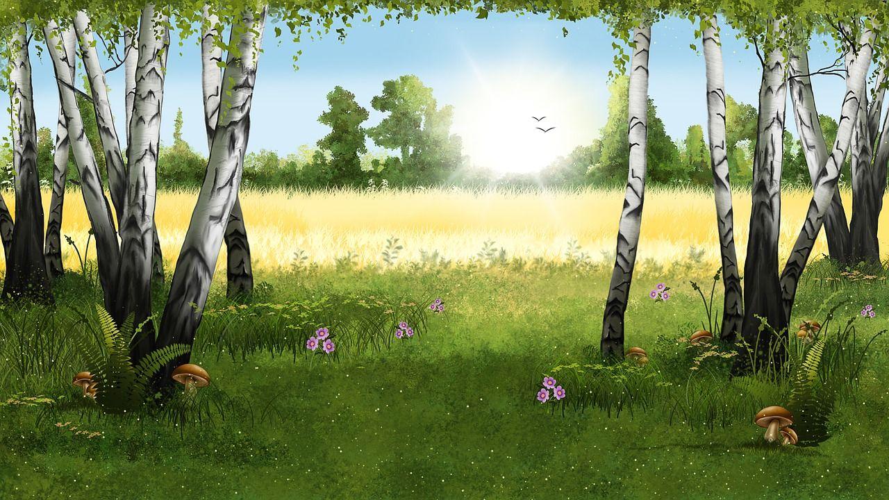 Imagem Gratis No Pixabay Paisagem Floresta Birches