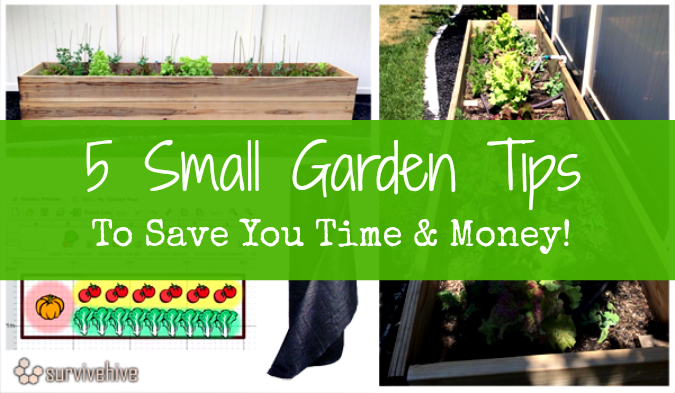 5 Small Garden Tips to Save You Time & Money - Survivehive