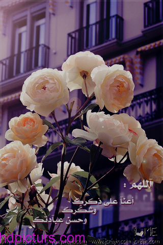 رمزيات بنات 2019 صور بنات رمزيات انستقرام بنات كيوت Flowers Heart Shelf Rose