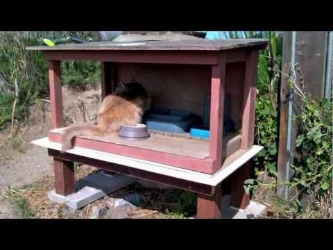 How To Skunk Proof A Feral Cat Feeding Station Youtube Cat