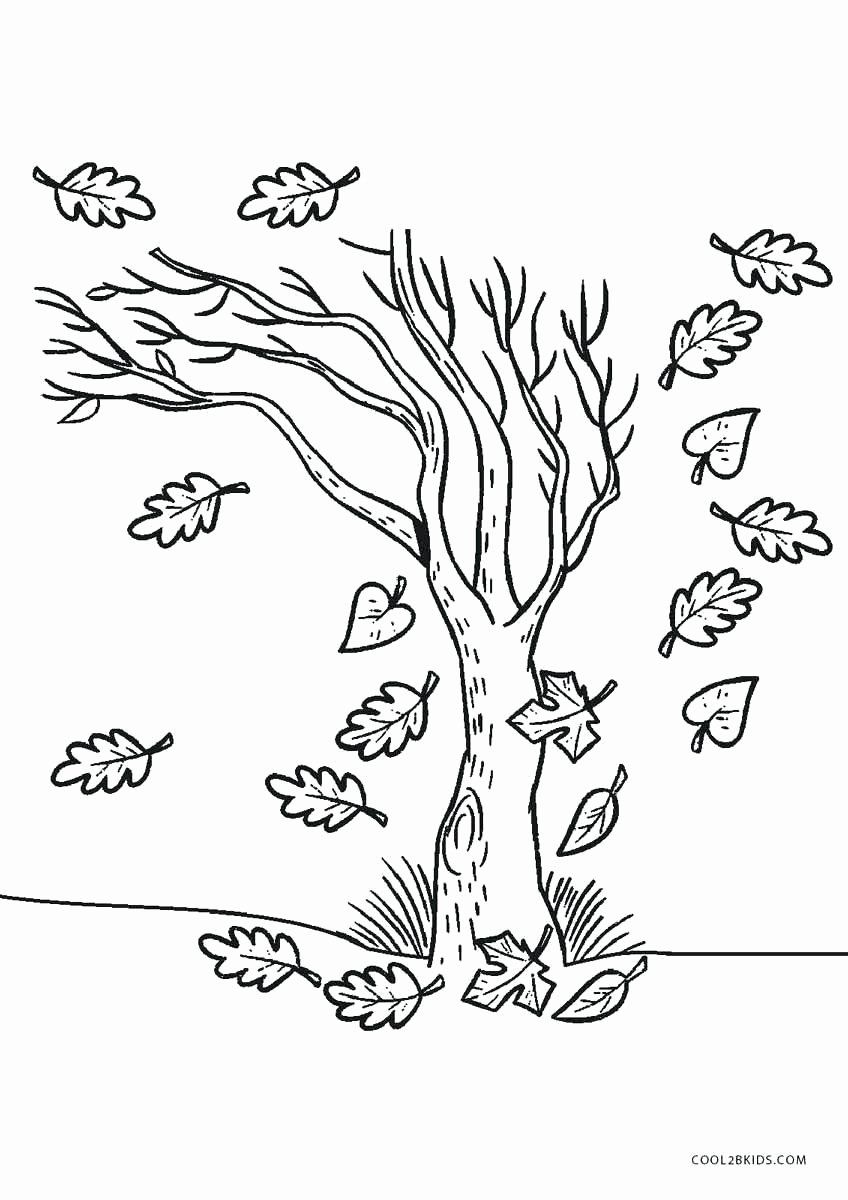Tree Coloring Pages To Print Elegant Rainforest Trees Coloring Pages Justpage In 2020 Tree Coloring Page Fall Coloring Pages Coloring Pages