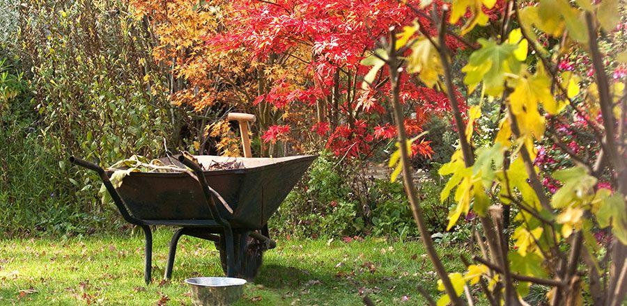Herbstputz im Staudengarten