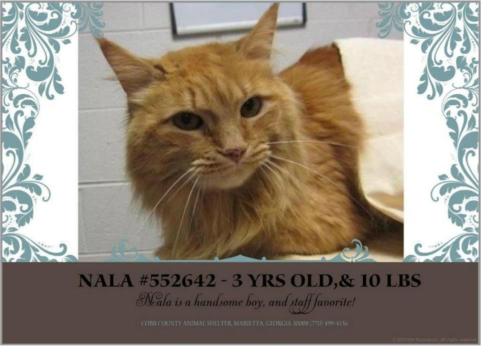 Nala is a handsome boy, and staff favorite! He came into