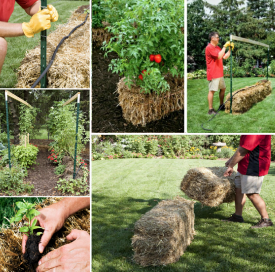 Straw Bale Gardening Conditioning Instructions Video | Straw bales ...