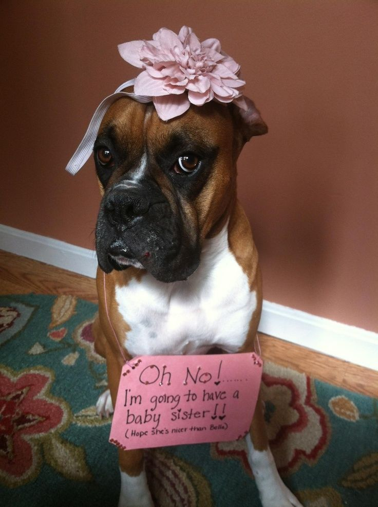 Gender Reveal Ideas With Dogs Google Search Babygendertips