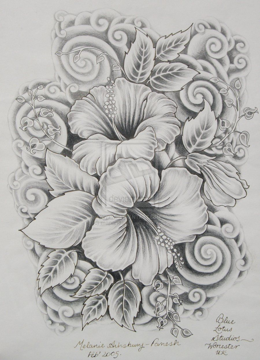Hibiscus Drawing Drawings Surreal 2011 2014 Mapanesh Pencil