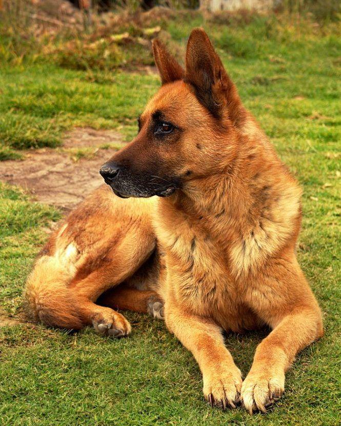 Picasso una de las mascotas de mi hermana  #Fotografía #Mascota #Perro #Photography #Pet #Dog
