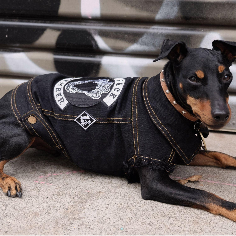 Black Denim Dog Jacket Pack Member Denim Dog Jacket Denim