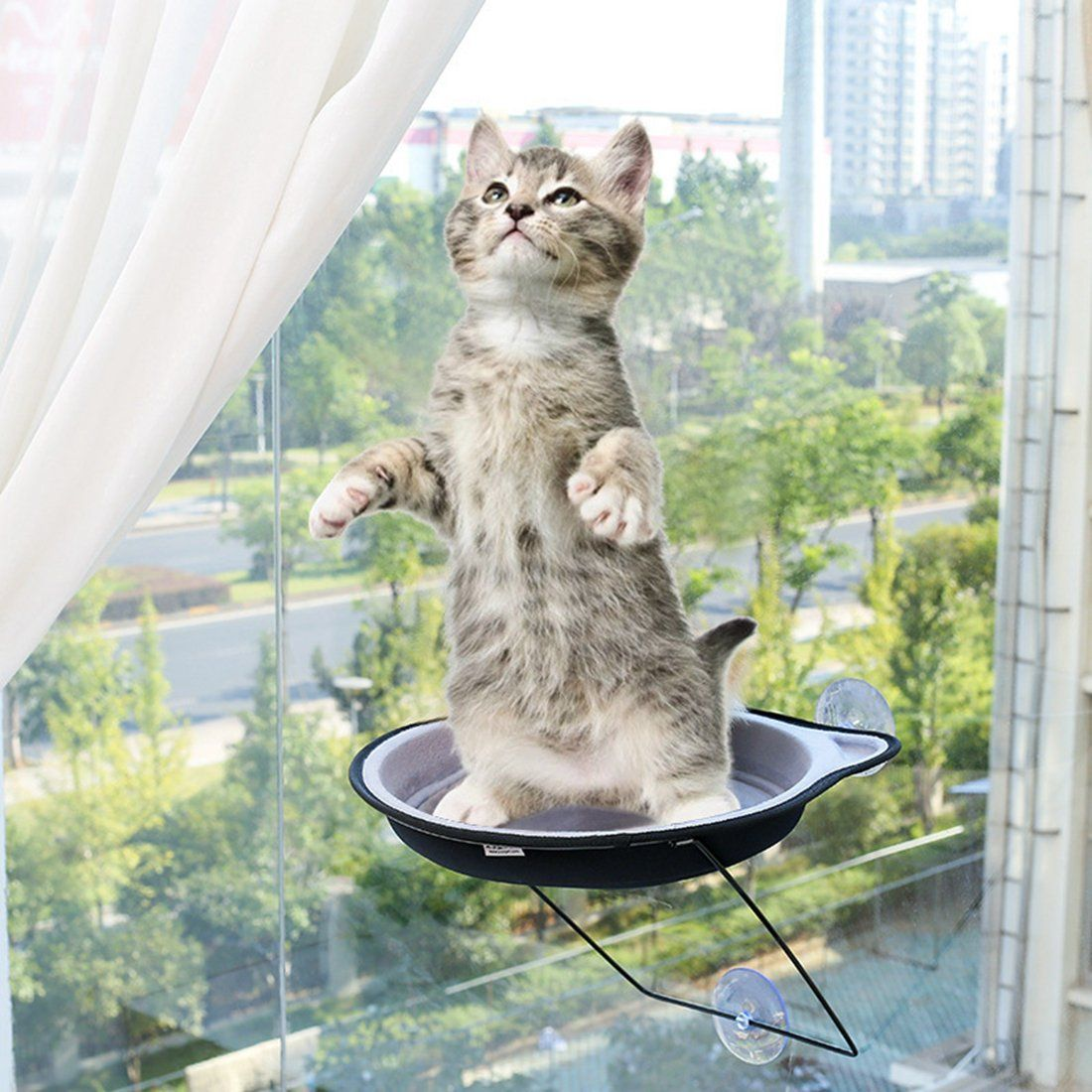 Cat Bed Alotm Cat Window Perch Kitty Window Mount Bed Seat With Suction Cups Hold Up To 33lbs Spacing Saving Hammock Safe Pet Sunn Cat Bed Warm Bed Cat Hammock