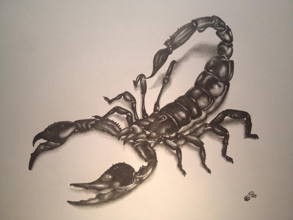 Scorpion Drawing Tatuaje De Escorpion Tatuajes Escorpio Tatuaje De Unas