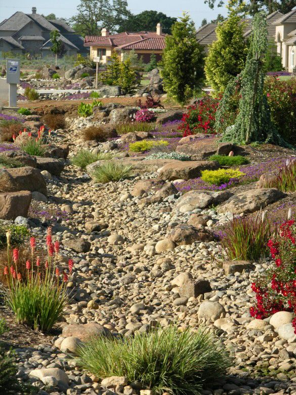 Dry Riverbed Look Alike Garden Design By Rod Whitlow.    Large Front Yard  But, They Hit The Nail Right On The Head, Once A Week Watering.