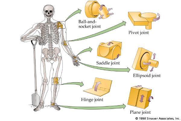 Pin By Mehedi Hasan On Medical Pinterest