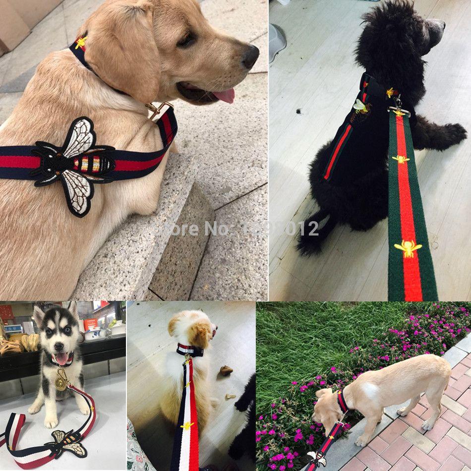 Luxury Bee Designer Dog Collar Designer Dog Collars Dog Design
