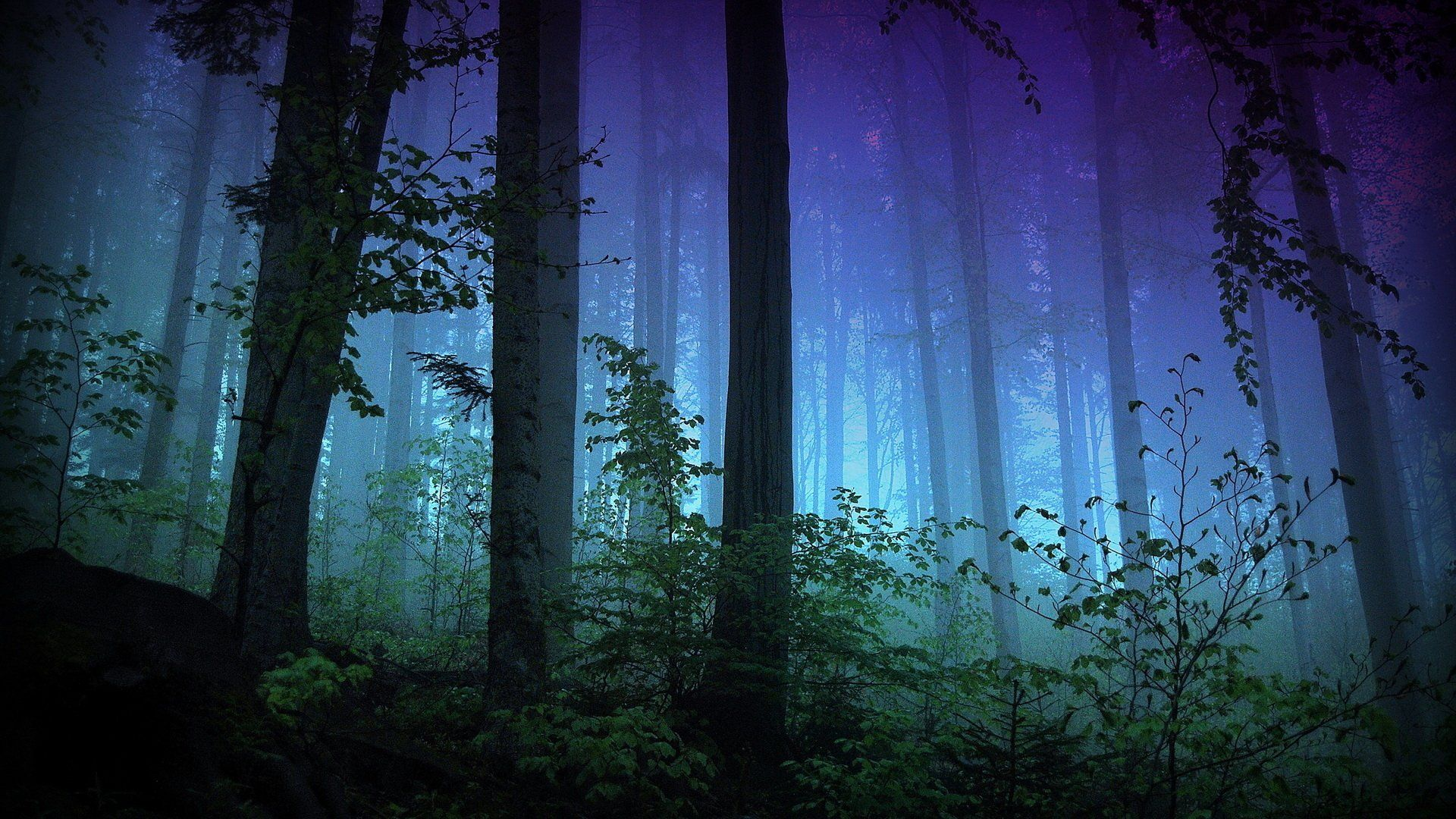 Foggy Forest Wallpapers Hd > Flip Wallpapers > Download