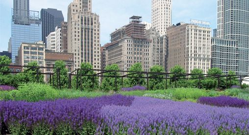 Green Roof With Heather With Lavender Green Roof Roof Green