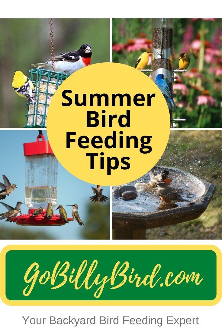 Summer Bird Feeding Tips in 2020 | Backyard birds, Bird ...