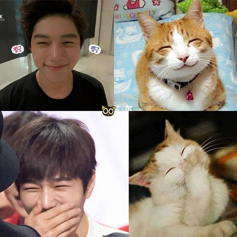 National Cat Day 10 Idols And Their Cat Doppelgangers Myungsoo Kpop Funny L Infinite