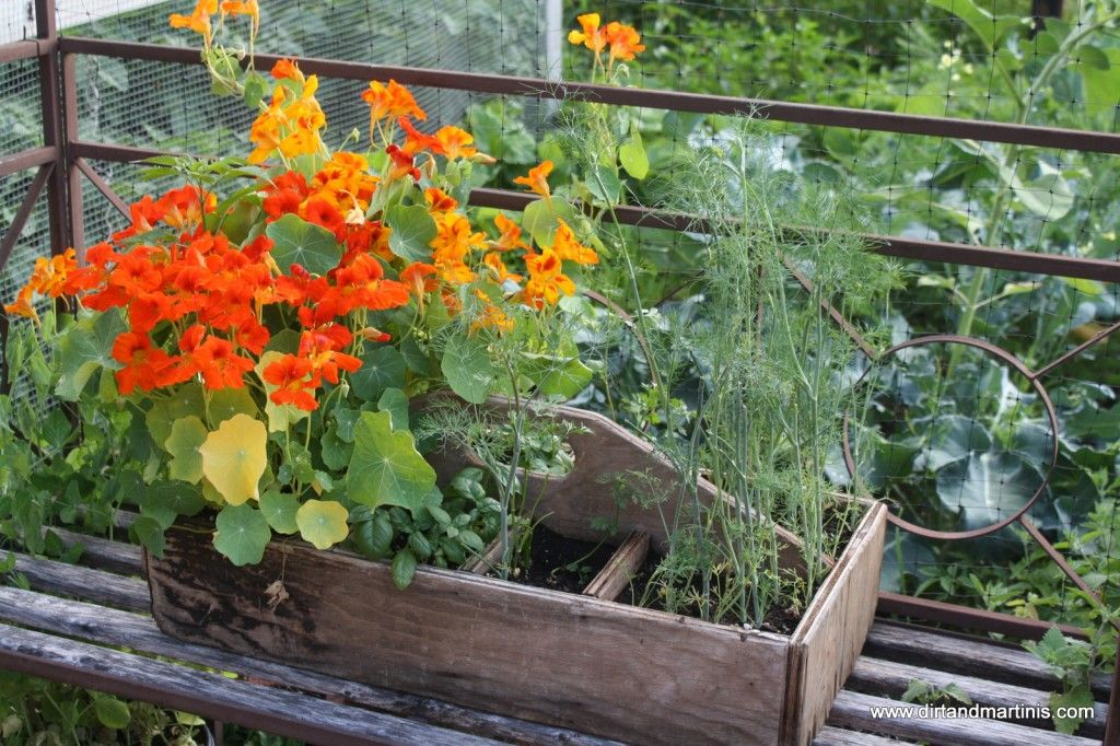 Old Wooden Toolbox Turned Into A Planter Gardening Pinterest