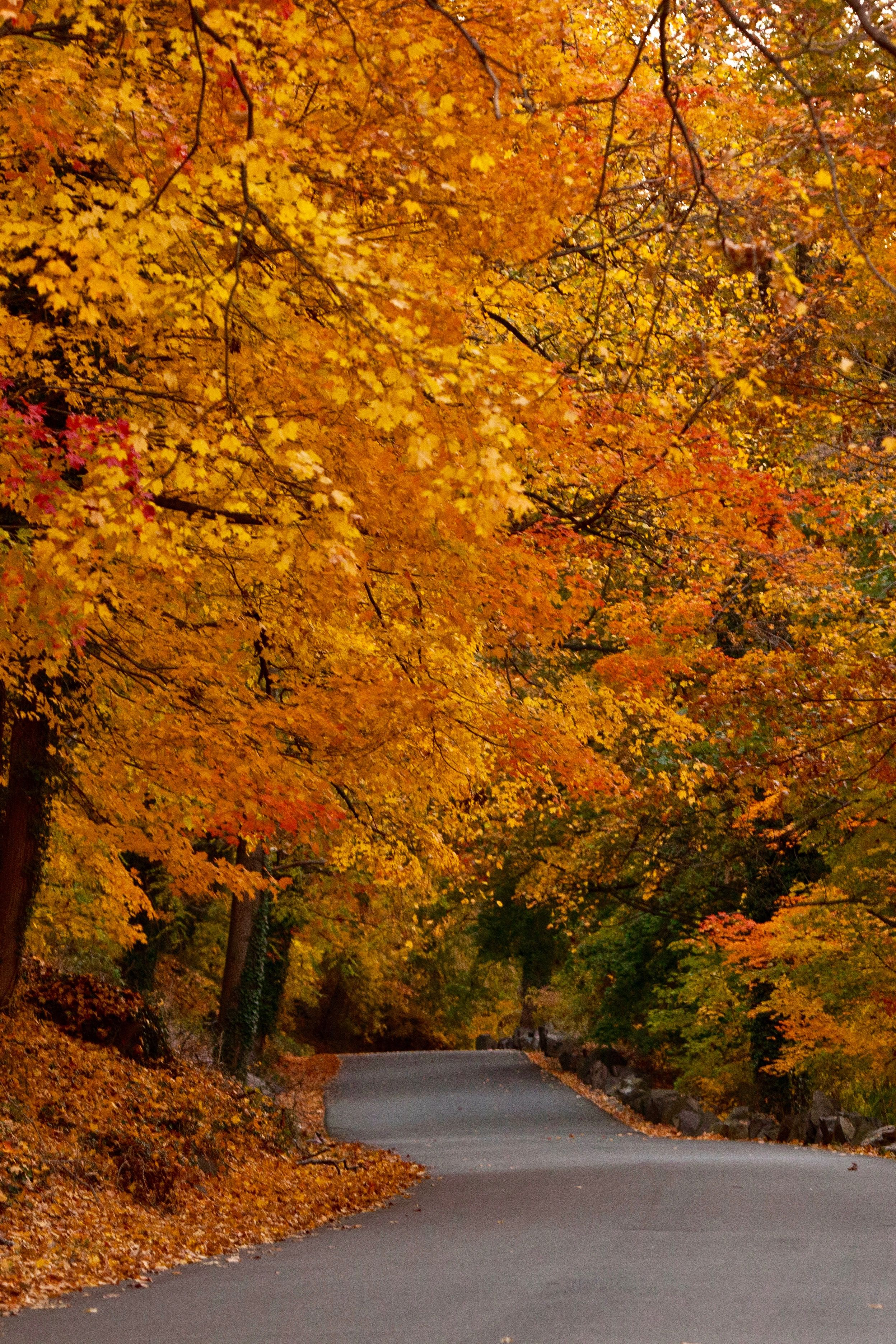 Take A Beautiful Fall Foliage Road Trip To See New Jersey S Autumn Colors Fall Foliage Road Trips Scenic Drive Scenic