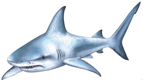 Shark Wall Decal by WallsoftheWild on Etsy, $39.95