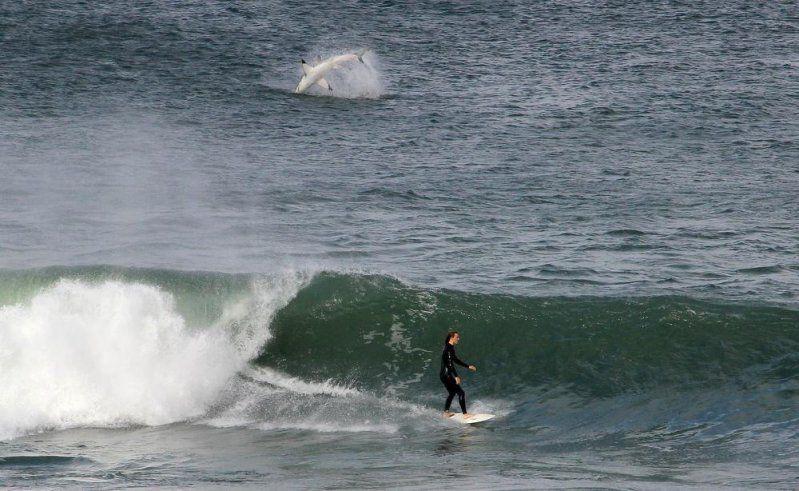 акула серфинг волна море | Акула, Фотографии
