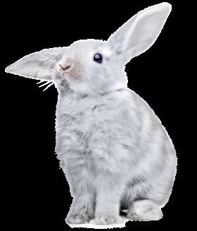 White Rabbit Isolated On White Background Animal Animals Cute Animals Rabbit Photos