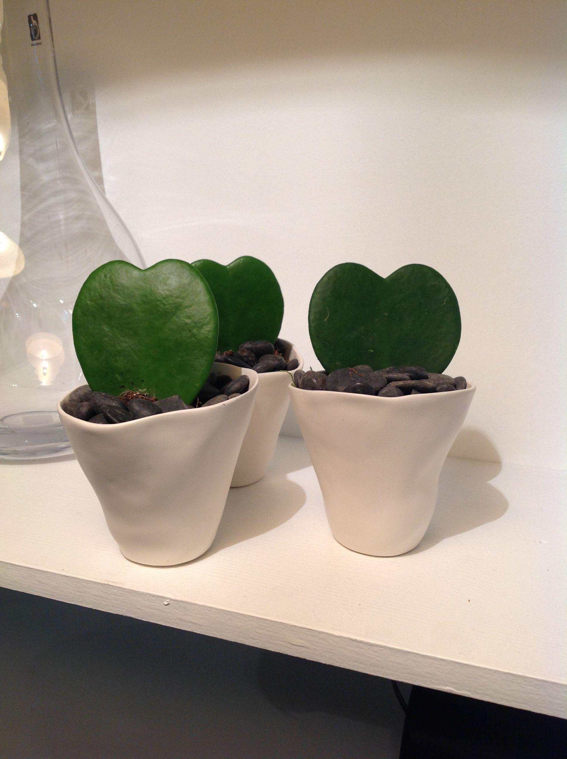 Plante fleurie ou verte cactus plante grasse arbre for Ou acheter des plantes