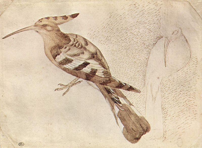 Pisanello 019.jpg