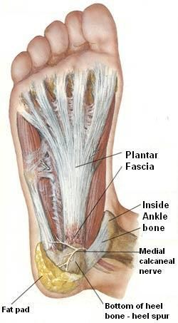 Work Outs For Rheumatoid Arthritis In The Foot And Ankle Plantar Fasciitis Heel Spurs Pes Planus