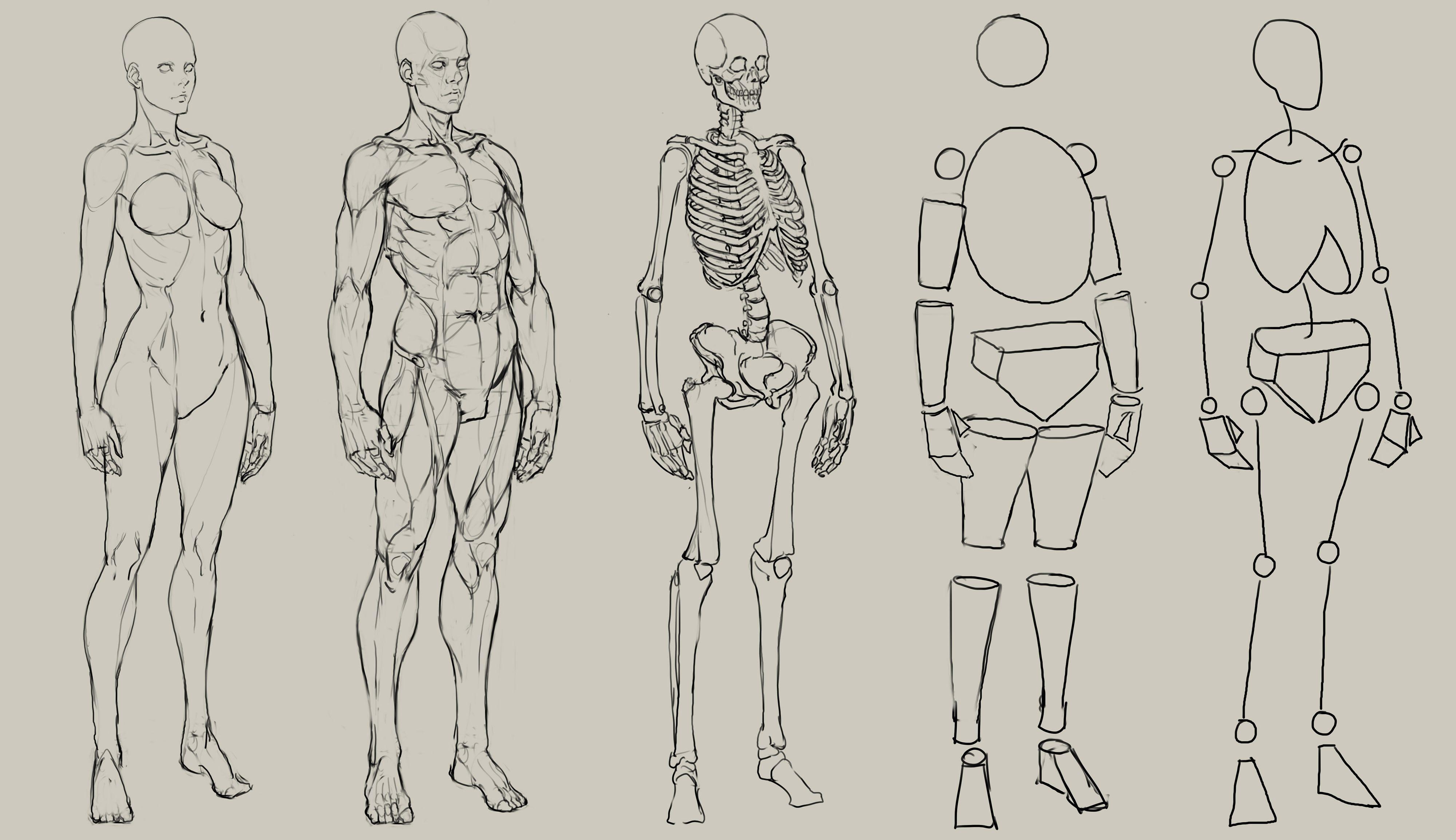 man body drawing - HD1920×1108