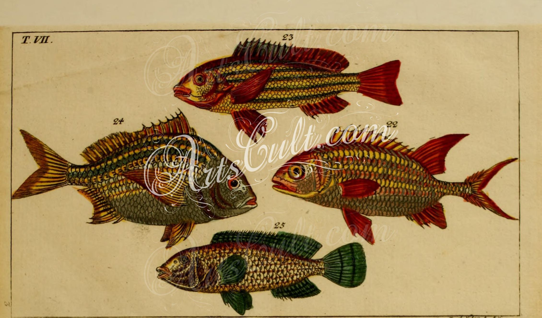 Luxury Swordfish Wall Decor Illustration - The Wall Art Decorations ...