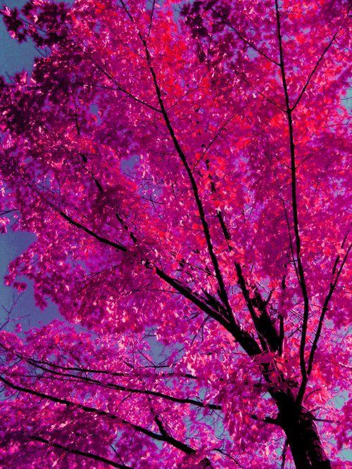 Justkeepswimmingirl Pink Trees Pink Aesthetic Pink Vibes