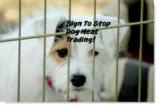 Please Sign To Help Stop Dog Meat Trade! - This is unbelievable! They need signatures! There's a video, but it's unbearable!  Mom 'N Daughter Savings