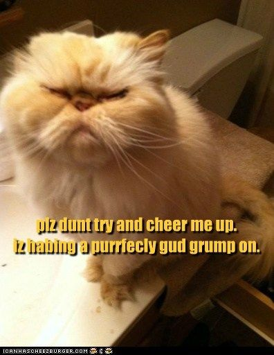 Untitled Grumpy Cat Cheer Me Up Grump
