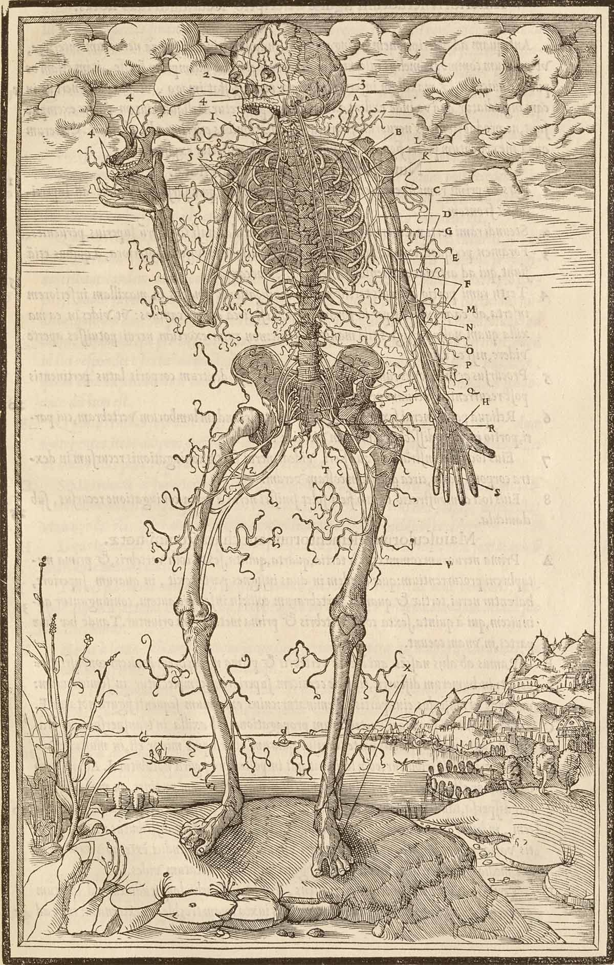 Skeleton With Detached Tendons Holding His Jawbone In Front Of A