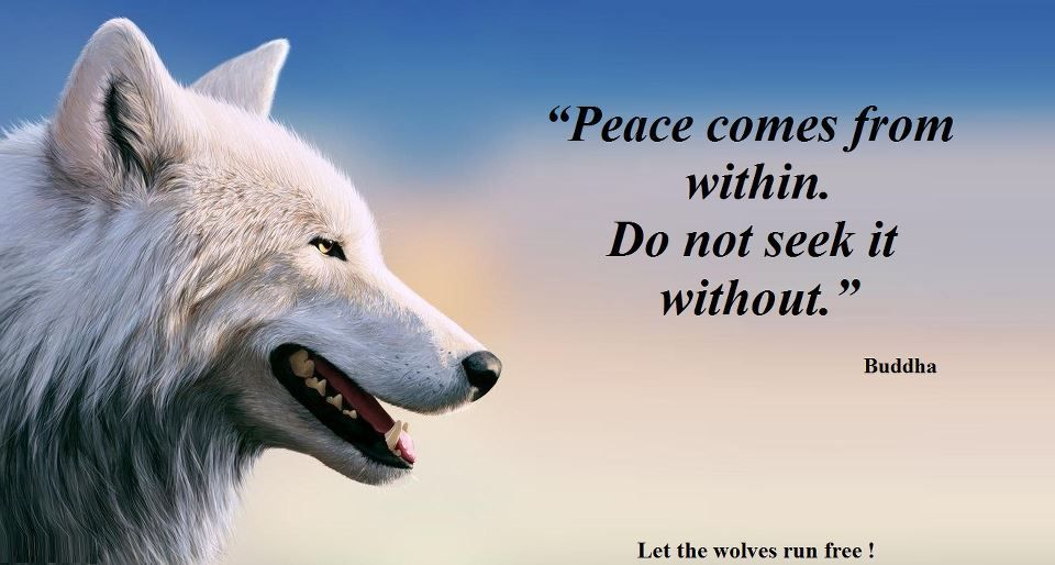 Wolf Quotes About Strength: Let The Wolves Run Free