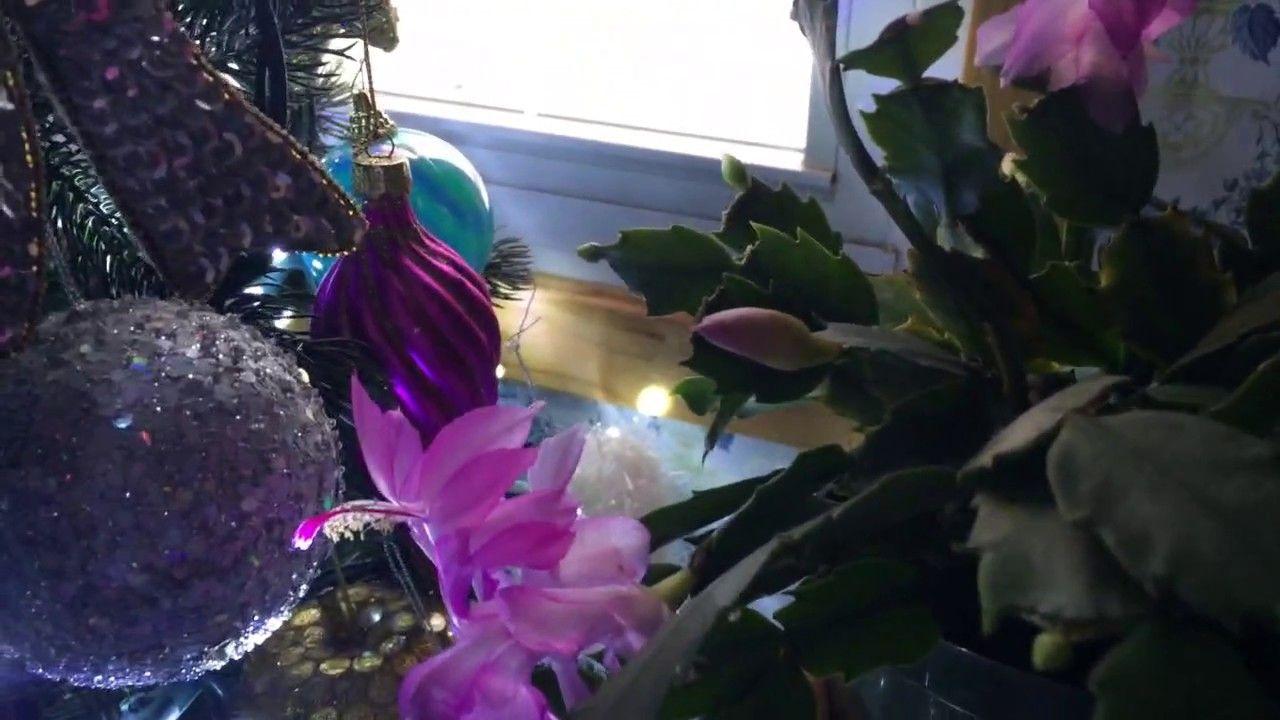 ✿Update on my beautiful Thanksgiving flowering cactus houseplant✿