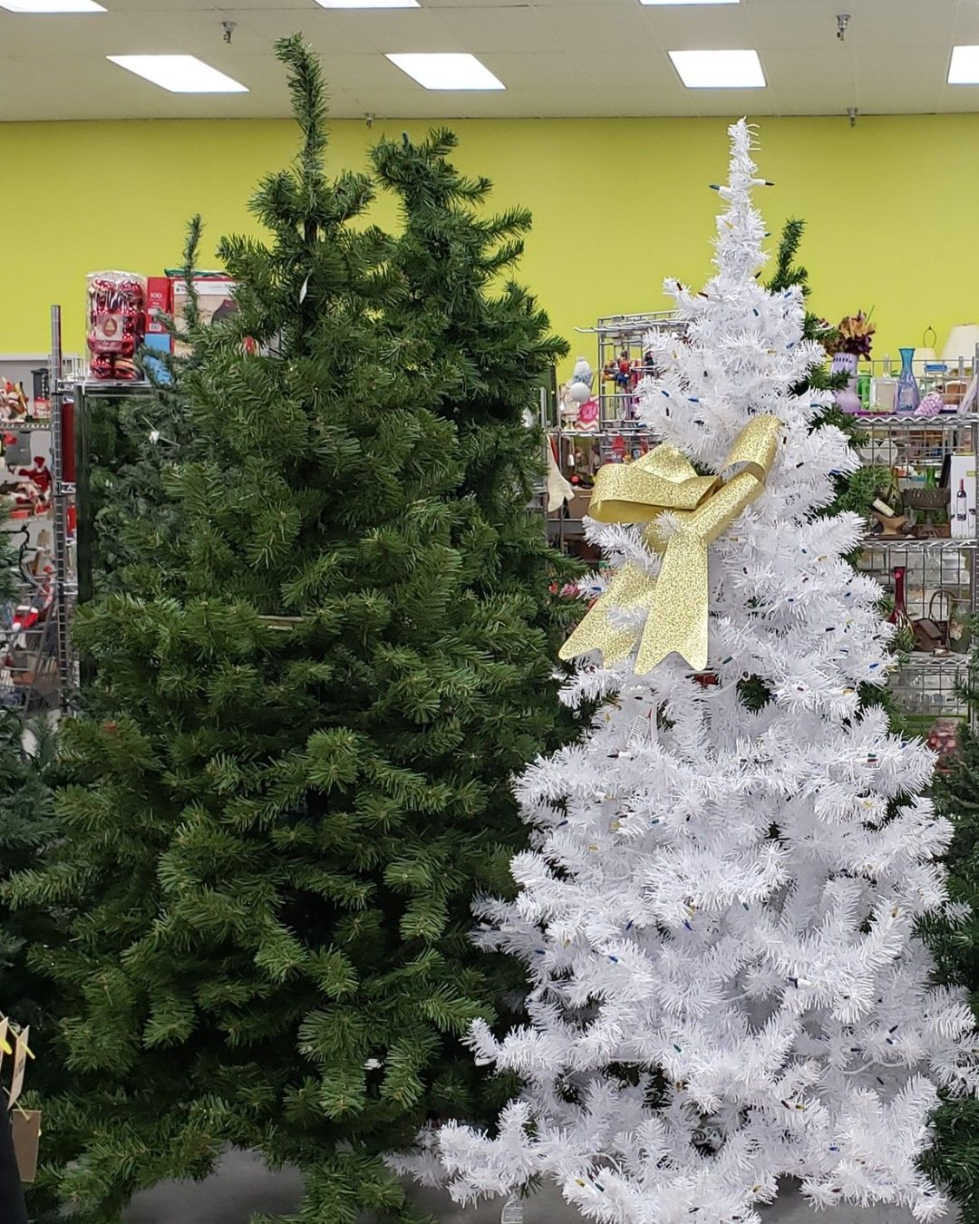Looking for a tree for the holidays? Goodwill has a BIG
