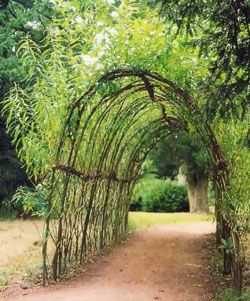 Between driveway and deck Living Willow Trellis  YES Living Willow Trellis  YES  I need one    Flower Gardens  . Living Willow Fence Panels. Home Design Ideas