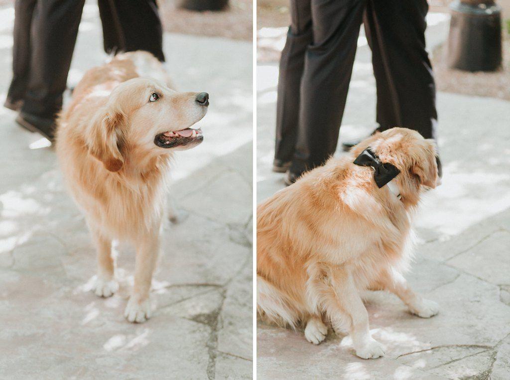 Real Wedding Inspo Dogs In Weddings Golden Retriever Wedding