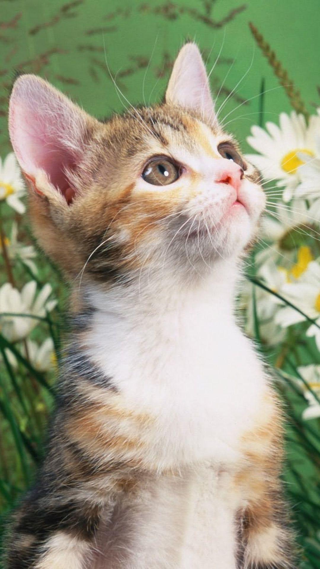 Kitten Daisy Flowers Gorgeous Cats Cats Kittens Cutest