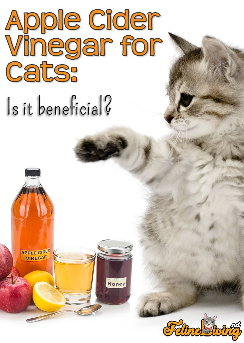 how to deworm a cat with apple cider vinegar